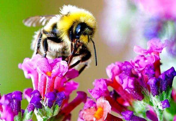 Targray Urban Beekeeping Project